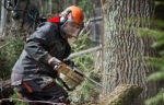 Worker cutting tree