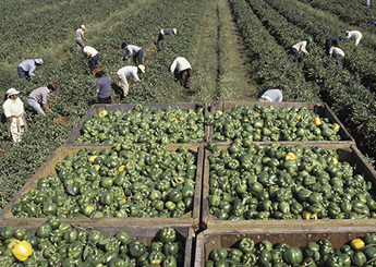 farm workers --022114