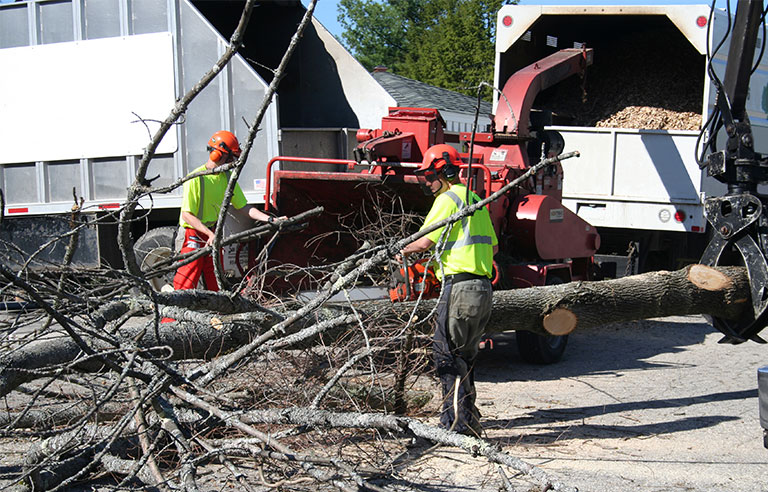 Tree care-related worker fatalities down in 2017: report | 2018-03