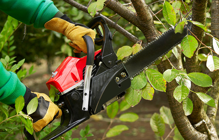 Deaths of six tree trimmers in Michigan spur hazard alert | 2016-10-12 |  Safety+Health Magazine