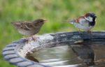 bird-bath
