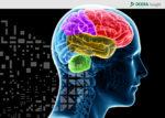 brain centered hazards