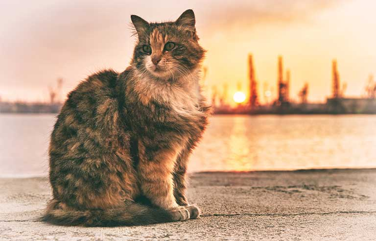 cat-sunset.jpg
