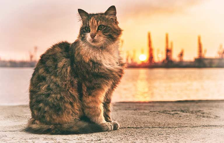cat-sunset
