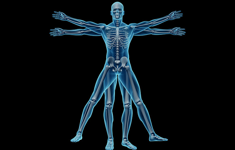 New math-based musculoskeletal model seeks to predict ...