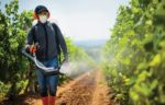 spraying-pesticide