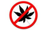 no cannabis