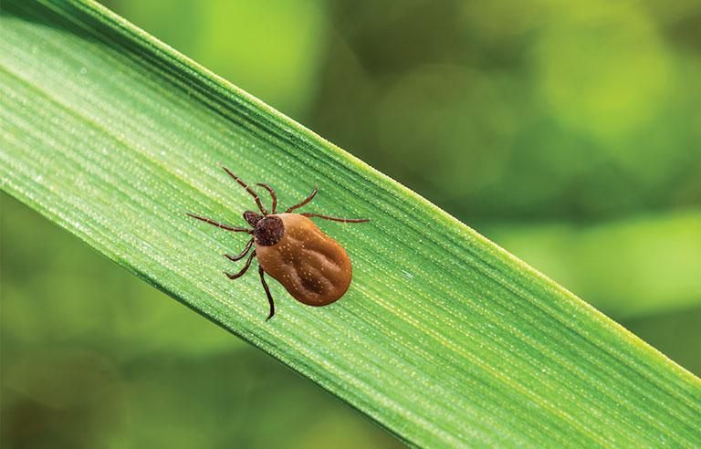CDC Warns of Potentially Bad Tick Season
