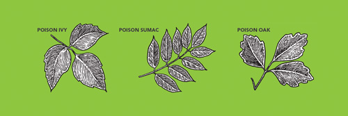 avoid poisonous plants when working outdoors 2016 06 26 safety